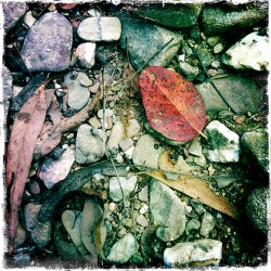 Leaf litter and quartz stones in Tarilta Creek.