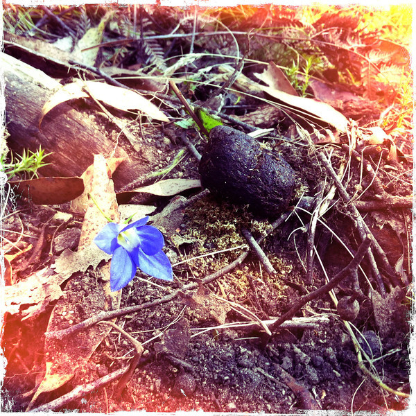 Wombat poo and flower